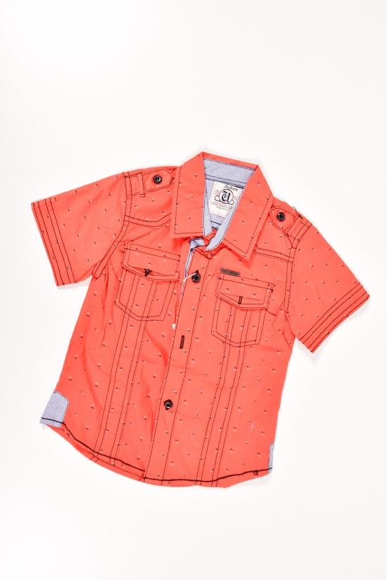 Шведка для мальчика (100% cotton) (цв.терракотовый) Роста в наличии : 92,98 арт.3665
