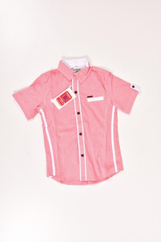 Шведка для мальчика  (цв.красный) ORIGNAL Рост в наличии : 152 арт.605