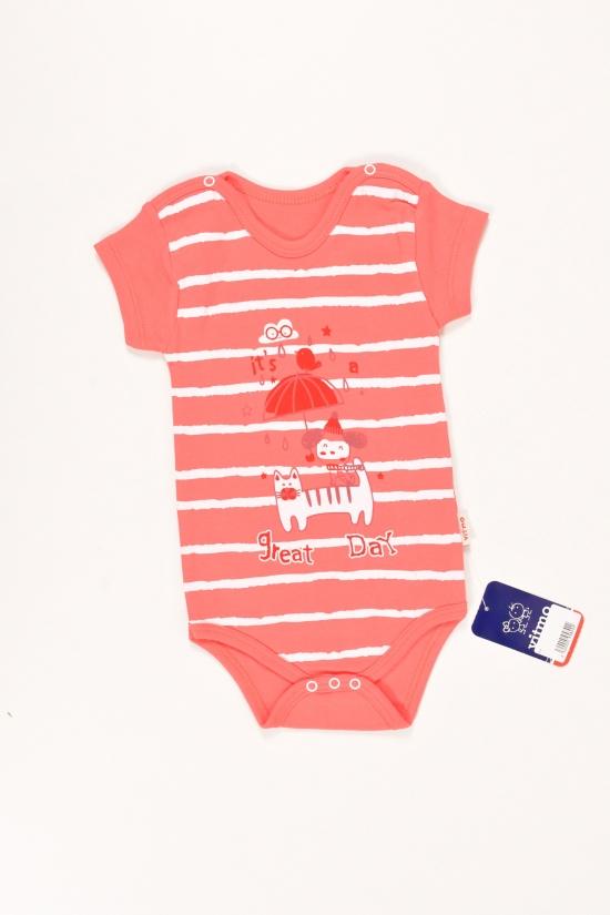 Боди для девочки трикотажное (цв.коралловый) Vitmo Baby Размеры в наличии : 62,68,74,80 арт.1337