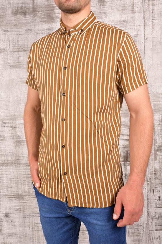 Шведка мужская (цв.коричневый) CUKUR Размеры в наличии : 42,44,46,48,50 арт.8060100