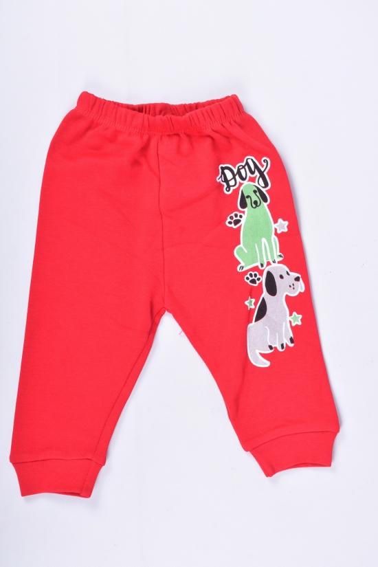 Штанишки для мальчика трикотажные (цв.красный) Размеры в наличии : 56, 62, 68 арт.25951